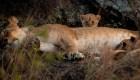 Animales emblemáticos en peligro de extinción