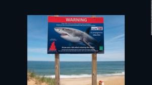 Tiburones blancos atacarían a humanos por error